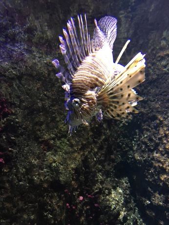 Crazy fish at the aquarium